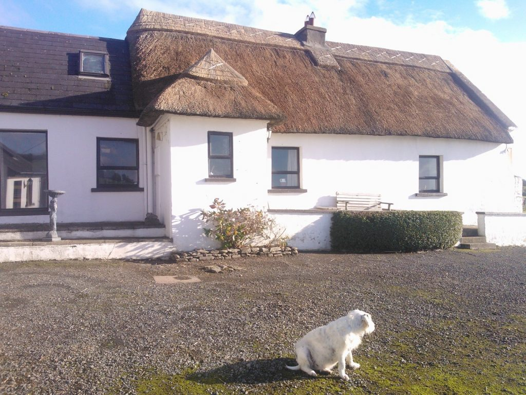 Thatched Cottage in Waterford - Ireland with White Dog in Foreground