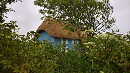Reed thatch on a cottage in Ireland.