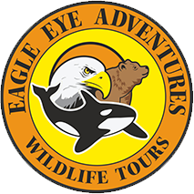 Bear Tours Vancouver Island