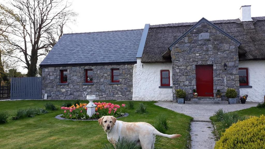 The Thatched Cottage B&B, Ireland