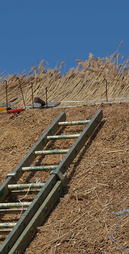 Ladder resting on a roof being thatched. Thatching tools on a thatched roof.