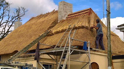 Thatching a hipped roof with water reed.