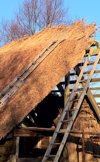 Roof Thatching in progress with blue sky behind.