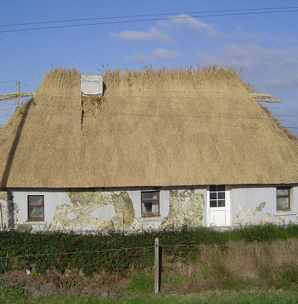Reed Thatched Cottage being re-thatched.