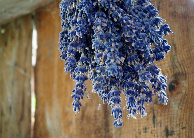 Lavender Drying upside down